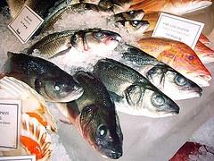 2006_harrods_fish